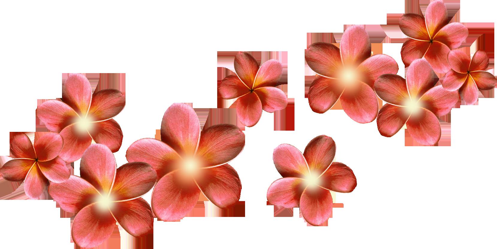 цветы в виде колокольчиков фото и названия