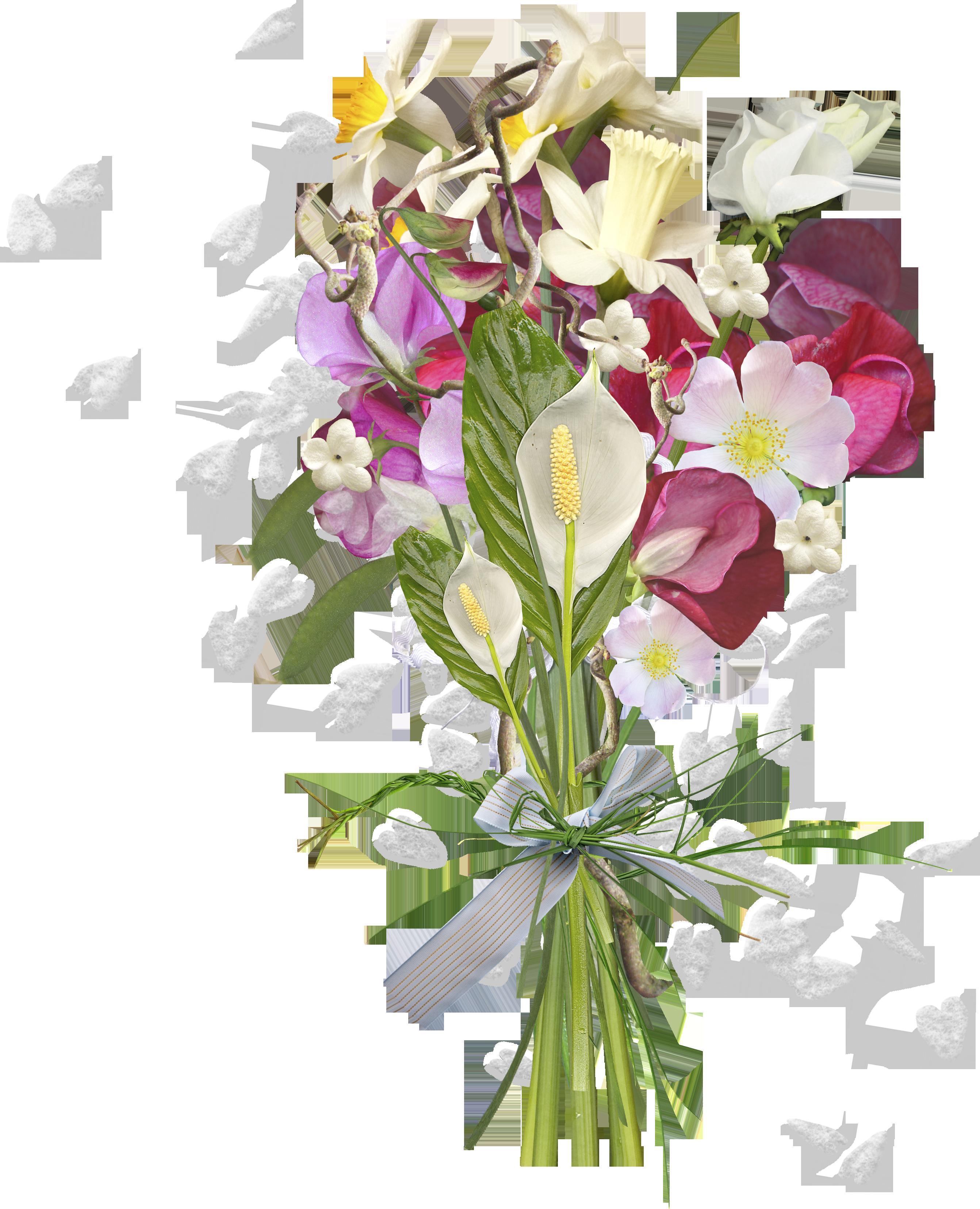 Фото цветов пиона