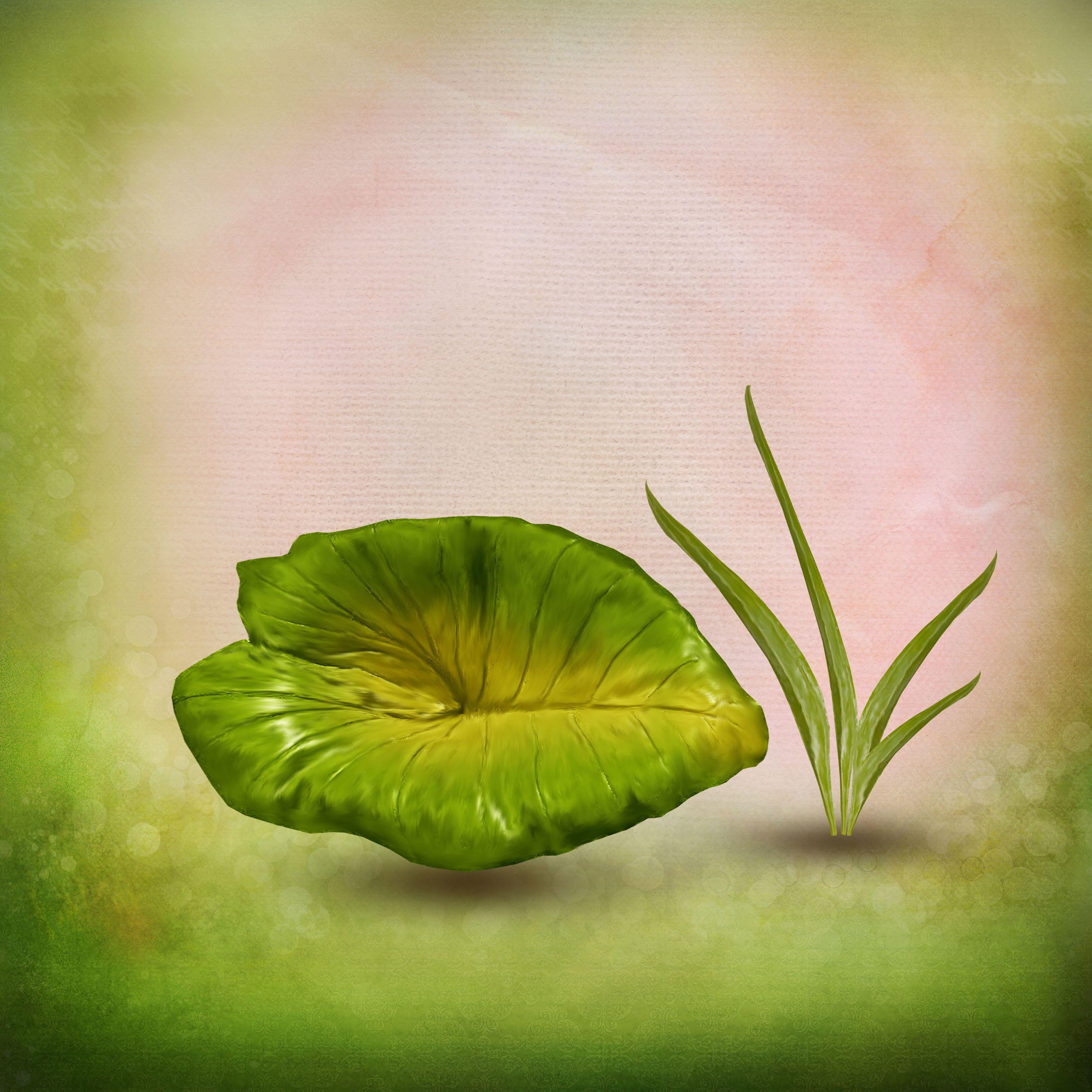 лист кувшинки
