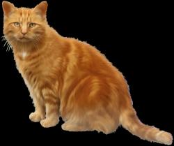 Кошки классные клипарты Белая Американская Короткошерстная Кошка