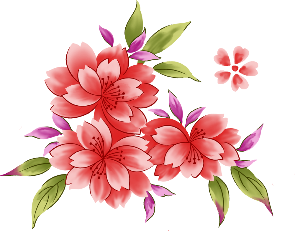 Астра картинка цветка
