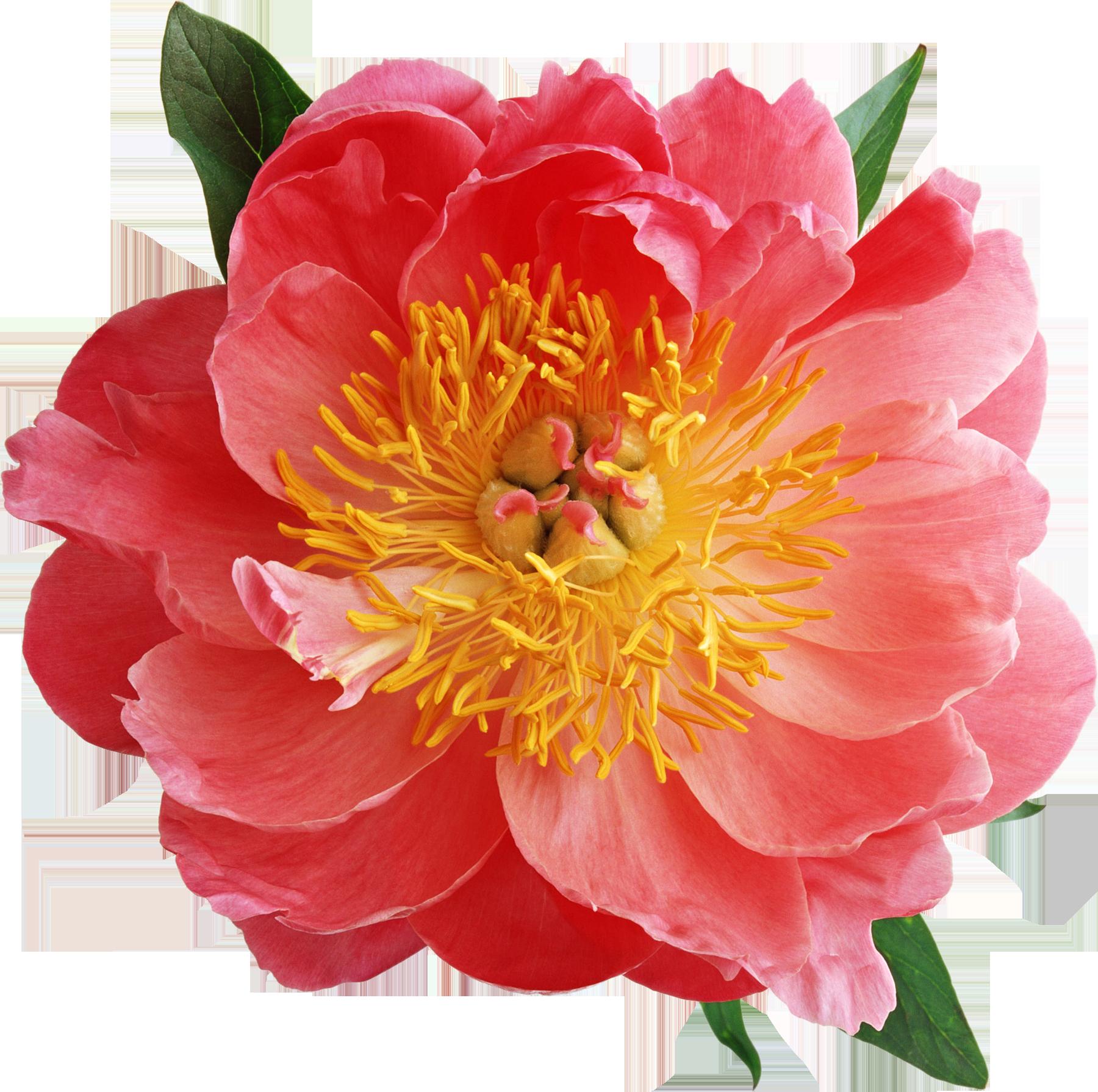 Доставка цветов в Челябинске Купить букет цветов в