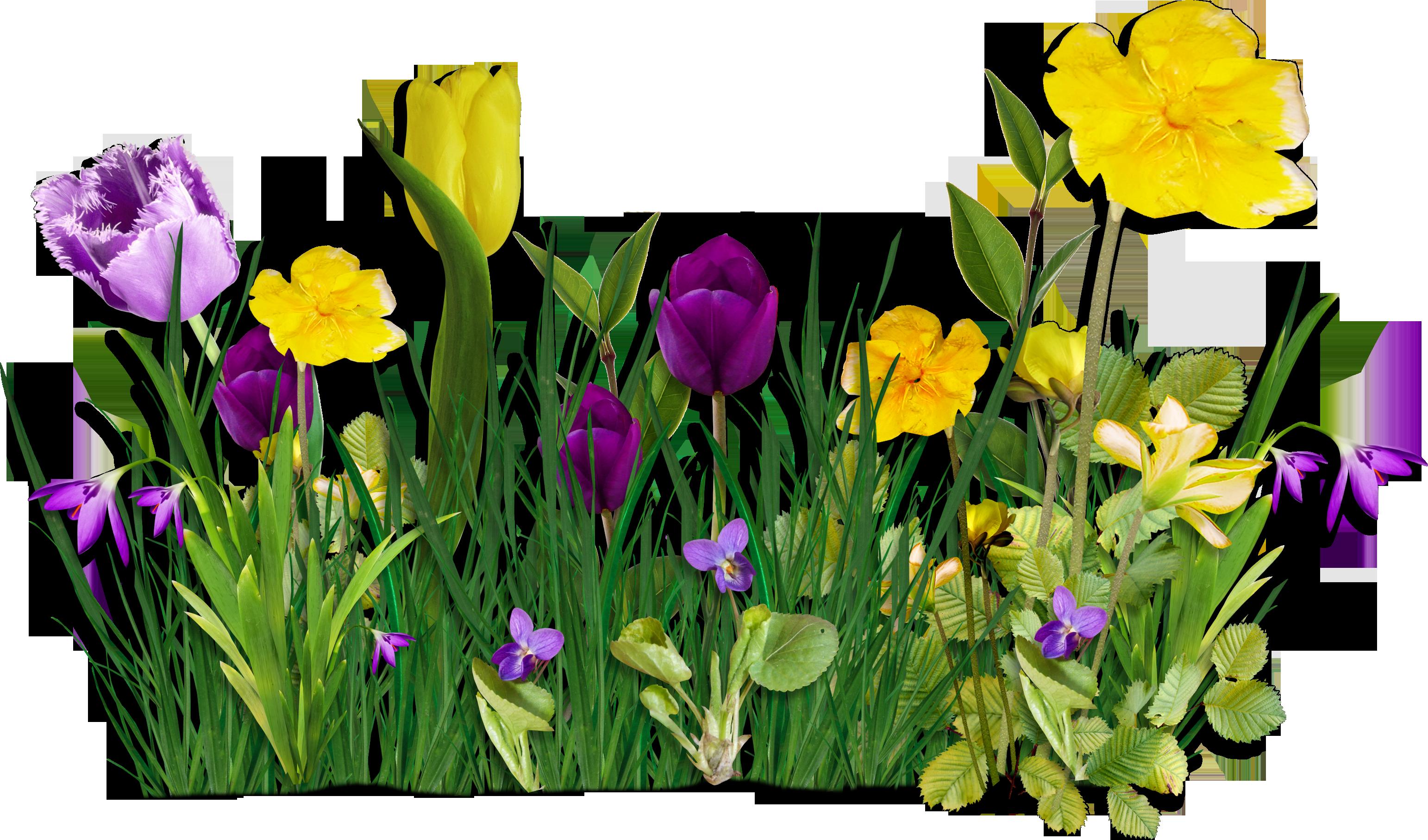 Картинки клумба с цветами