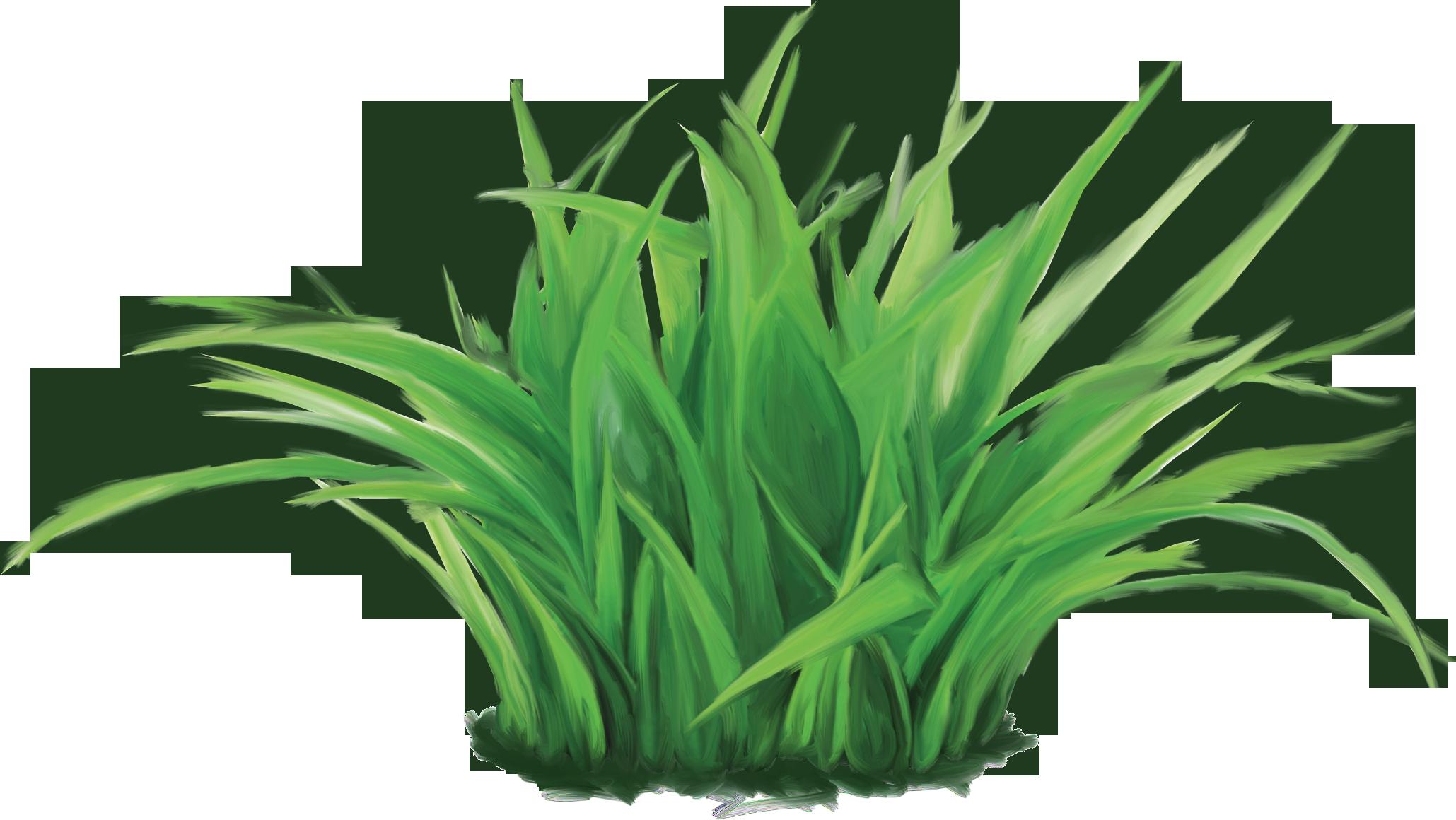 Травка для цветов фото