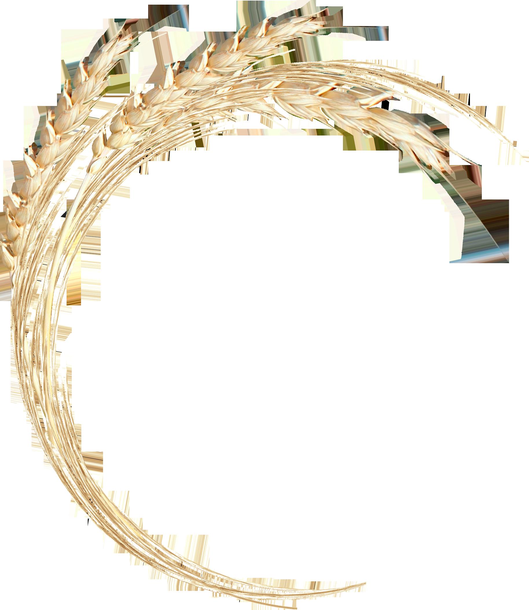 венок пшеницы картинки кишечная формы при